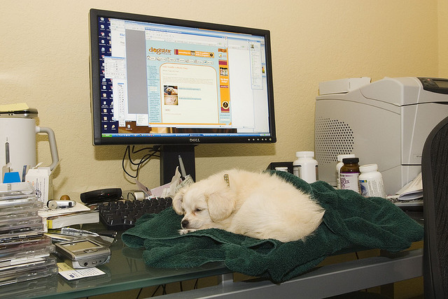 No wonder you have trouble working at home. It helps to create a workspace and stick to regular hours (and move the dog). Photo: John