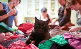 cat in the foreground of clothing swap party