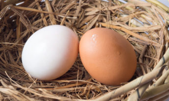 two eggs in a nest - roth ira vs 401k