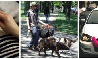 woman knitting, man walking dogs, car with lyft mustache