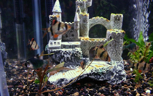 castle in fish tank