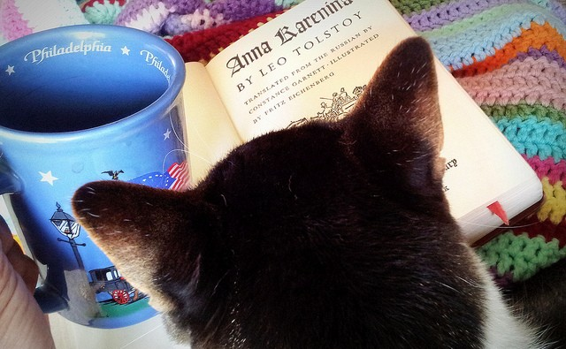 cat reading tolstoy