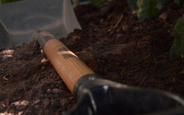 shovel in the dirt