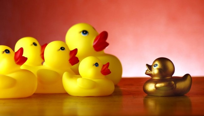 golden duck and rubber ducks