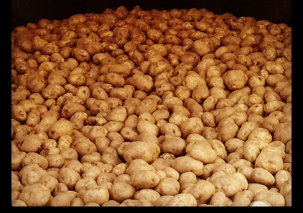 truckload of potatoes