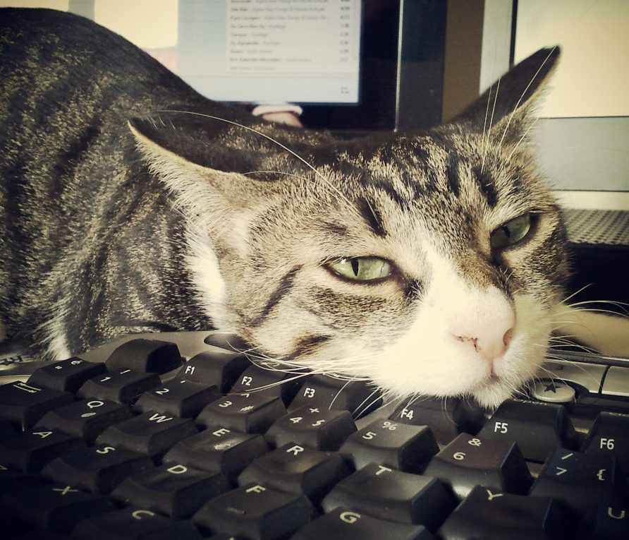 grumpy cat on computer keyboard - how to save a bad day at work