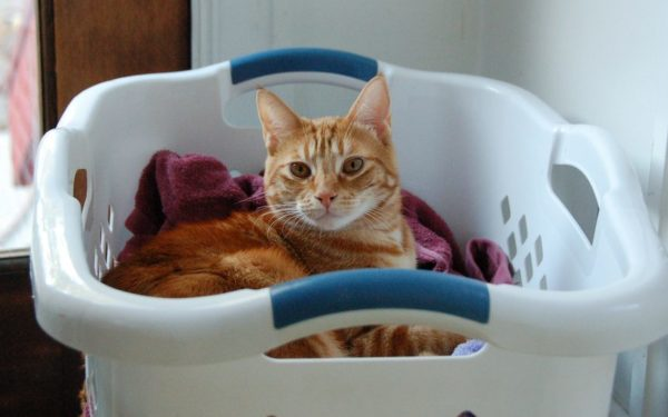 cat in laundry basket - homemade laundry detergent