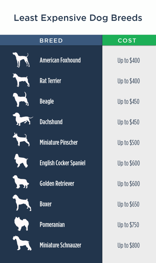 least-expensive-dogs2
