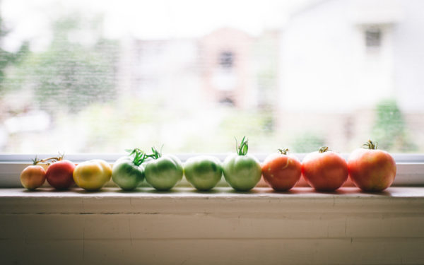 tomatoes on a windowsill - urban gardening tips