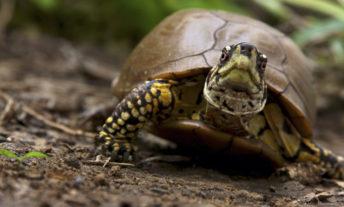 tortoise - what are bonds bond investing