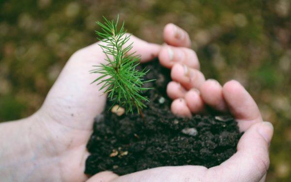 holding a tree sapling