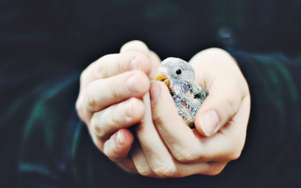 baby bird cradled in hands